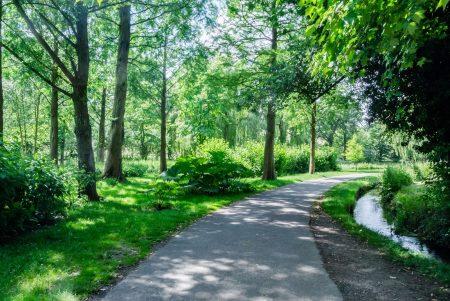静かな森で散歩してリラックス