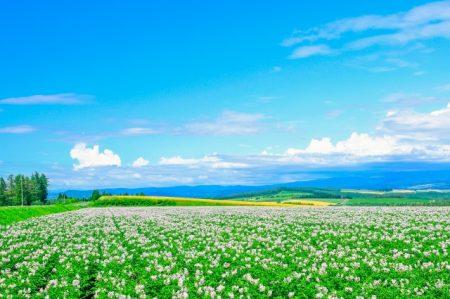 自然豊かな地方の風景